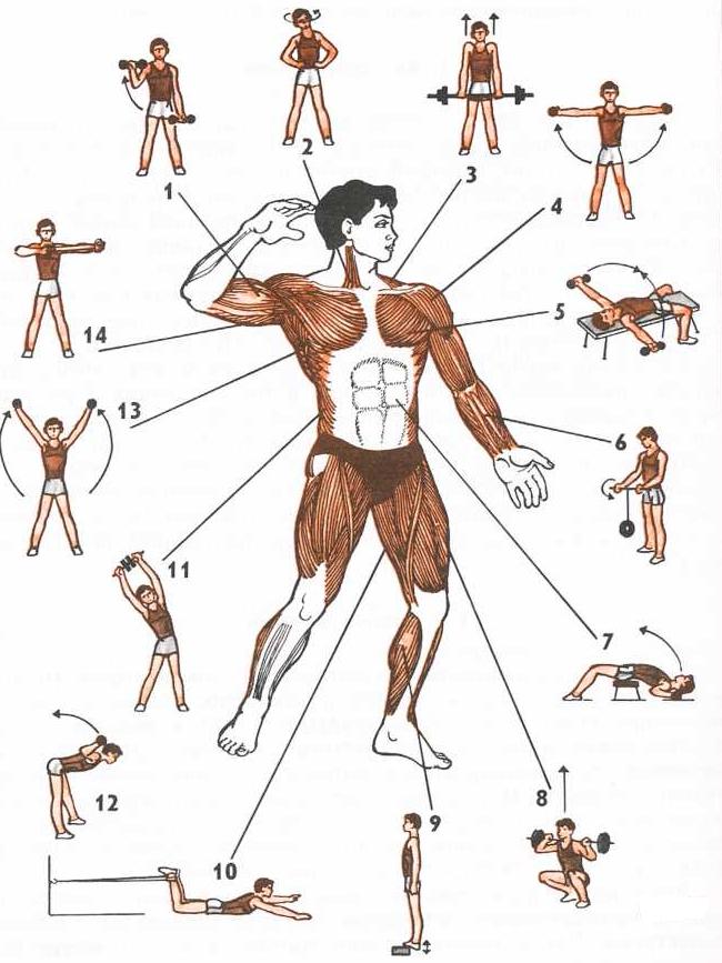 нашей упражнения для развития мышц с картинками жидкость коричневого цвета